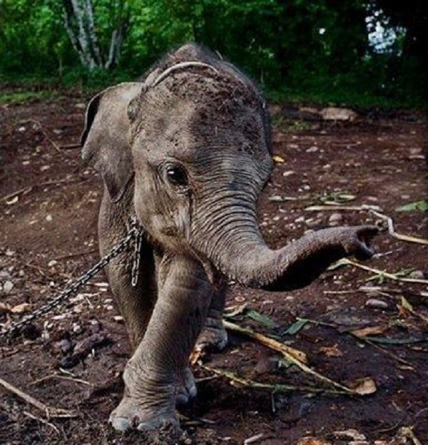 elephant saved 1