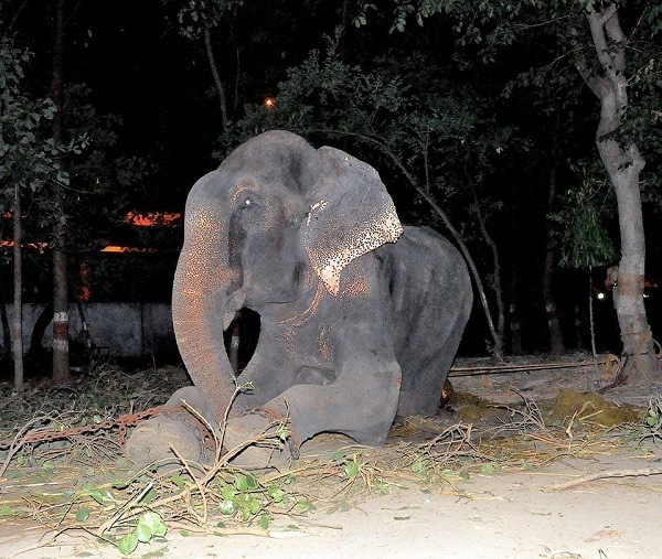elephant saved 7