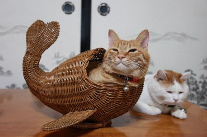 Determined Cats 2