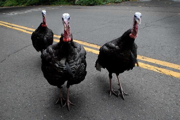 Thanksgiving Mishaps 2
